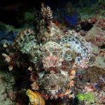 DIVING IN RAJA AMPAT #6
